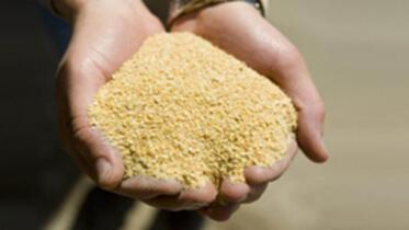 豆粕生產廠家 飼料養殖大豆粕報價 發酵飼料豆粕生產廠家